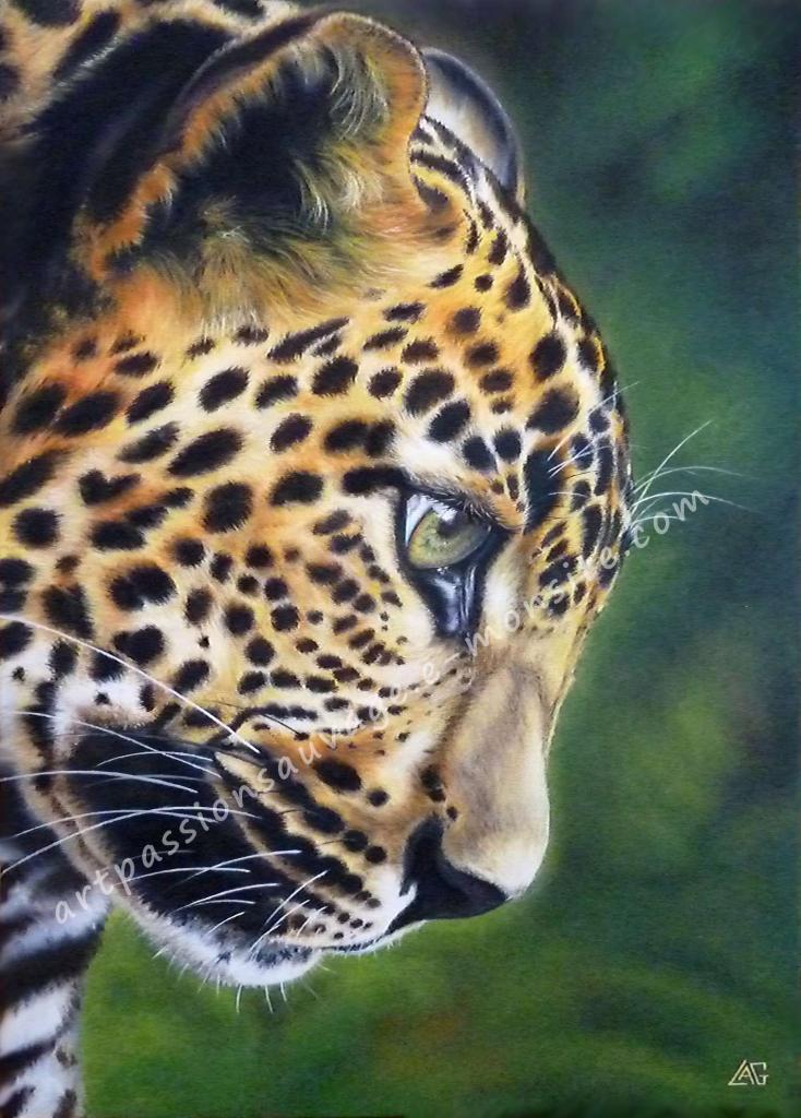 Profil Jaguar sur toile 38x55 cm