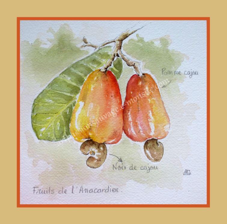 Fruits de l'anacardier (noix de cajou)