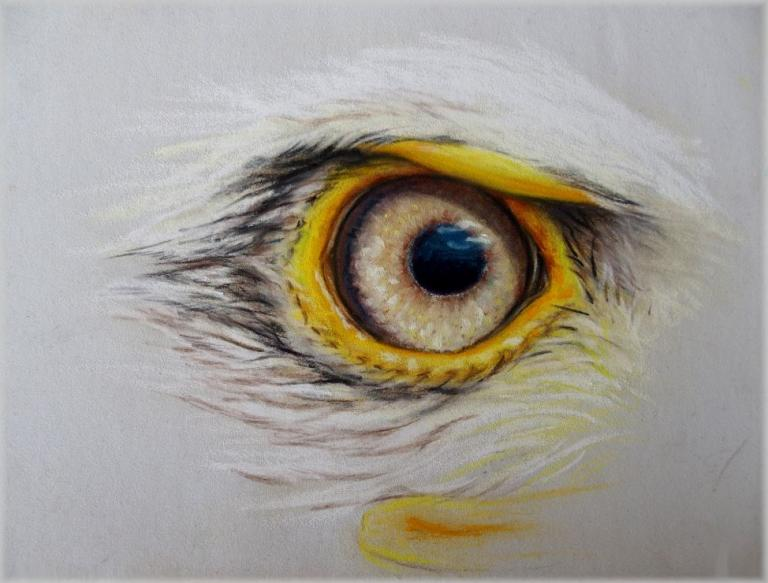Aigle pastel