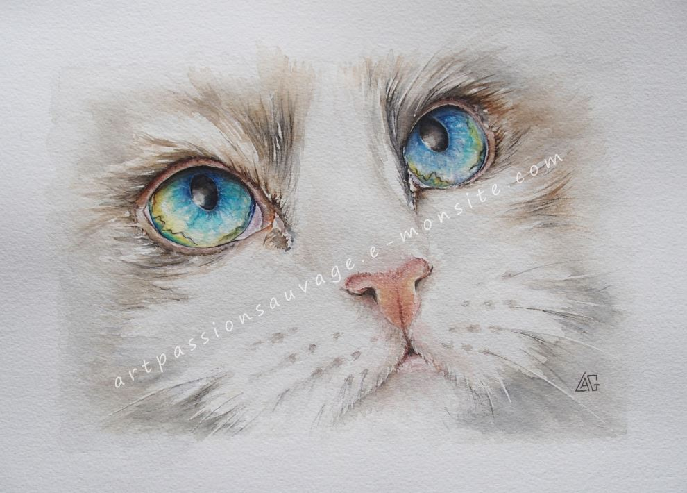 Darling - chat aquarelle