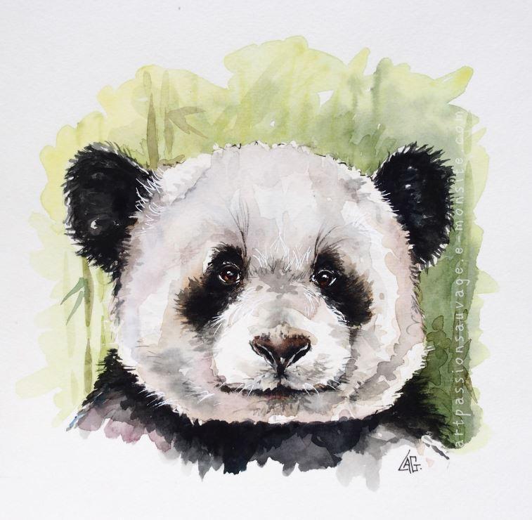 Panda aquarelle 30x30xcm