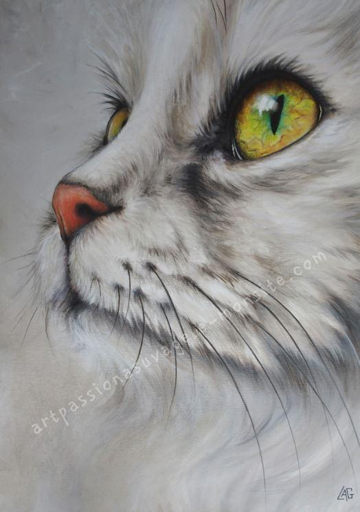 Chat huile