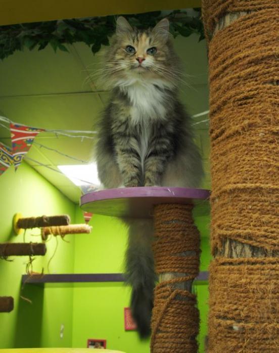 Bar à chats - Dubaï