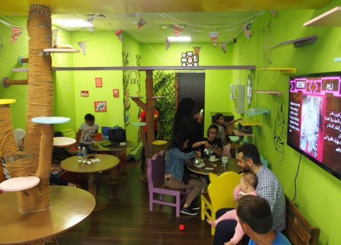 Bar à chats Ailuromania - Dubaï