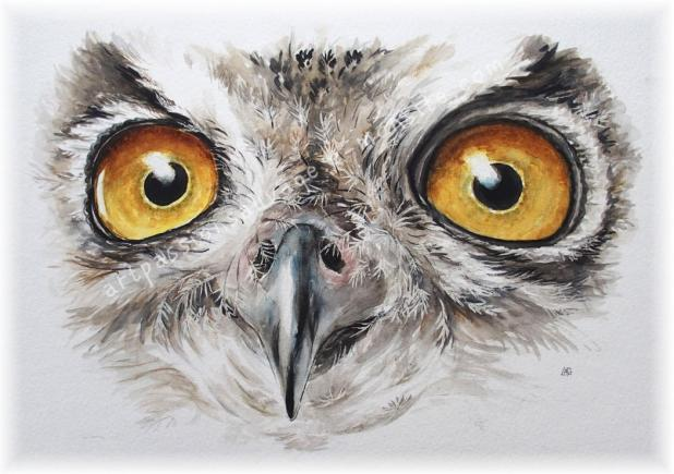 Hibou Grand Duc aquarelle