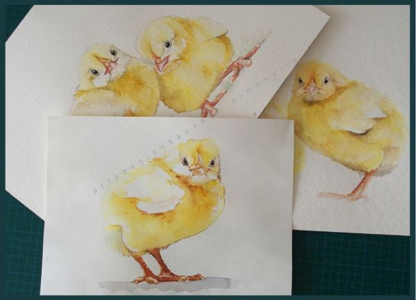 Poussins aquarelle