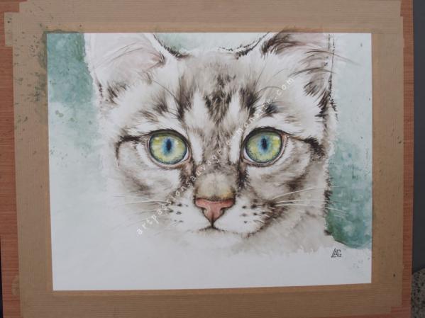 Jeune chat aquarelle