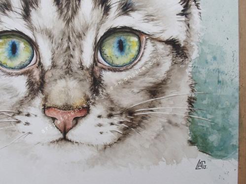 Jeune chat aquarelle - détails