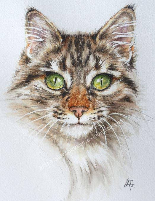 Aquarelle chat