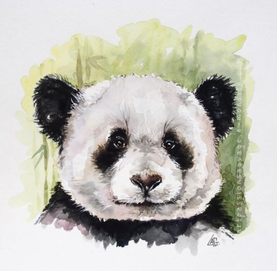 Panda aquarelle