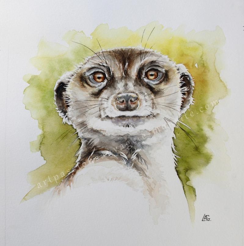 Aquarelle animaux - Le suricate