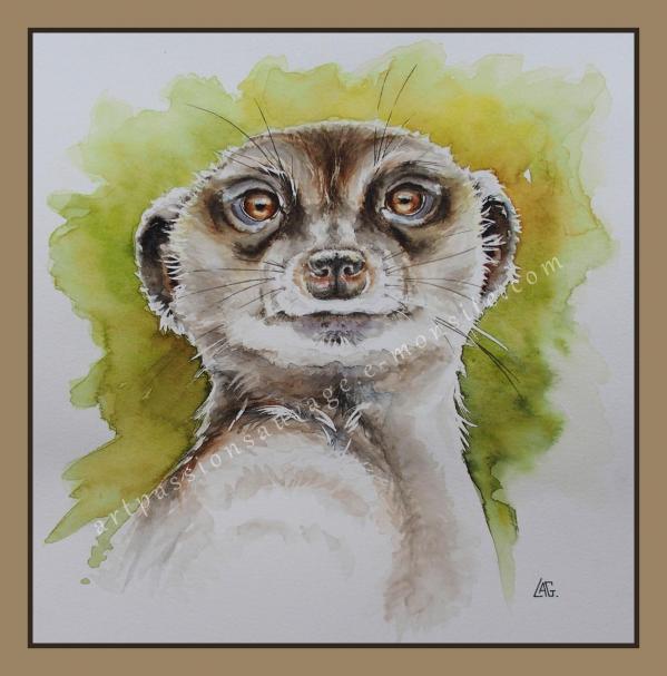Aquarelle animalière - suricate