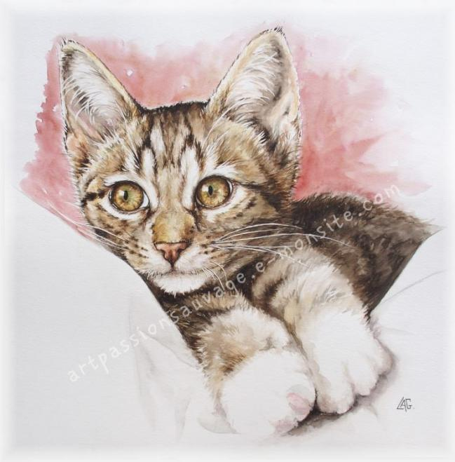 Chat aquarelle