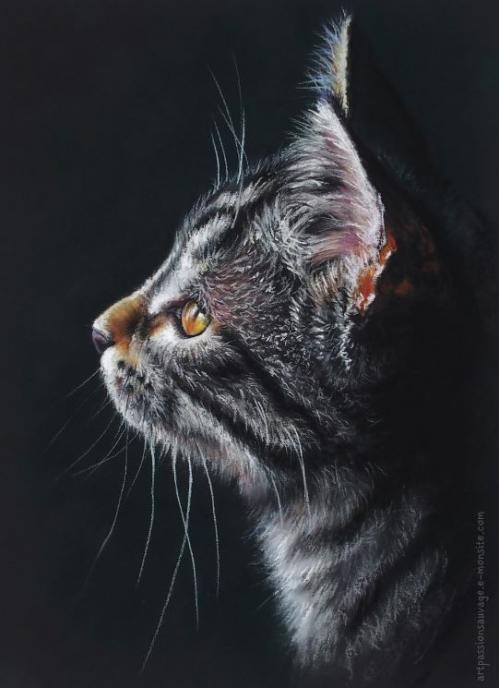 Portrait chat pastel